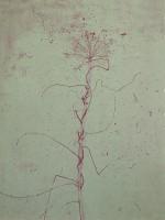 http://www.mireillegros.ch/files/gimgs/th-11_7-etching-70-x-50-cm-plate-.jpg